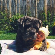 Brutus And Hugging A Baby