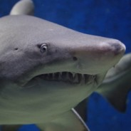 Learn About Sharks With These Interesting Facts