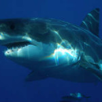 Test Your Shark Knowledge In Anticipation Of The 30th Annual Discovery Channel Shark Week